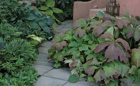 Choosing The Right Paver Color Choosing The Right Paving Materials Fine Gardening