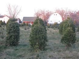 fleet farm christmas trees christmas lights decoration