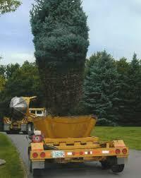 tree installation methods shade pine evergreen arbor hill tree