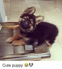 Cute Puppy Memes - 25 best memes about cute puppy cute puppy memes