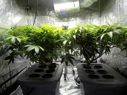 Grow Room Lights How To Choose The Right Indoor Marijuana To Grow Light