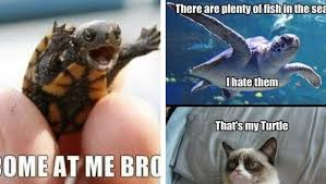 Turtle Memes - 29 hilarious turtle memes that are so funny they re actually dangerous