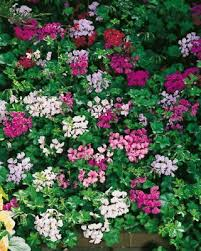 Flowers For Window Boxes Partial Shade - which plants are best for hanging baskets partial shade flowers