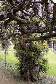 the prettiest tree i did see imgur