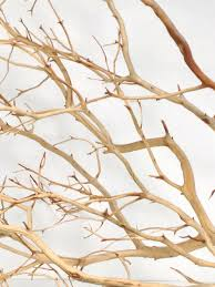 manzanita branches for sale buy online driftwood bamboo manzanita and more for your home