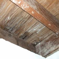 is it safe to use vinegar on wood cabinets how to treat a mold infestation on wood with borax 20 mule