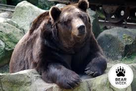 Running Bear Meme - do bear bells really work backpacker