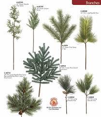 beautiful design needle tree varieties from fraser