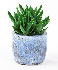 Buy House Plans by Buy House Plants Now Aloe Vera Bakker Com Bedroom House Plans