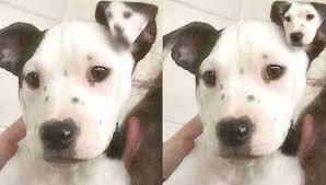 puppy born selfie ear dodo