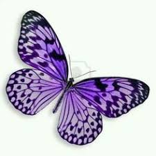 image result for purple butterfly