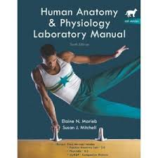 Hole Anatomy And Physiology 13th Edition Human Anatomy U0026 Physiology Lab Manual Marieb 10th Edition