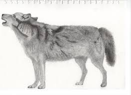 sketch wolf standing eligt my site