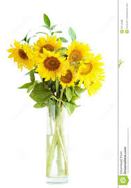 Vase Of Sunflowers Sunflowers Bouquet In A Vase Royalty Free Stock Images Image