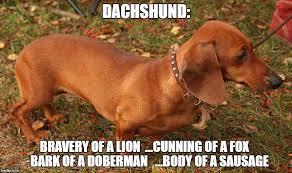 Wiener Dog Meme - 8 funny dachshund memes what every dog deserves