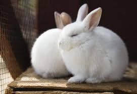 rabbit housing picking a rabbit cage