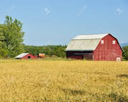 red barn and wheat field stock photo picture and royalty free