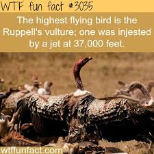 Funny Pics For Thanksgiving Best 20 Funny Turkey Pictures Ideas On Pinterest Funny Turkey