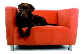 upholstery cleaning orange county exciting upholstery cleaning orange county decor and fireplace