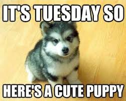 Tuesday Funny Memes - we figured you all needed something cute this morning puppy dogs
