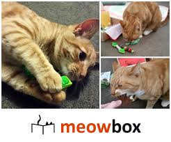 reviews chews u0026 how tos review giveaway meowbox subscription