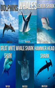 buy shark amazing photos u0026amp fun facts book about sharks for