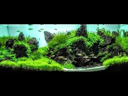 Aquascaping Guide The Secret To Making Plants Bushy And Compact Aquascaping Youtube