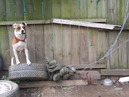dog tethering ordinance and the leash law raleighnc gov