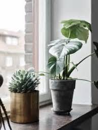 une plante dans une chambre attrayant plante verte pour chambre a coucher 24 laqu233 dans le