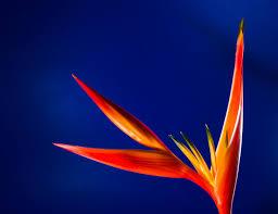 Flag Flower Free Images Blossom Wing Light Sky Night Sunlight Leaf