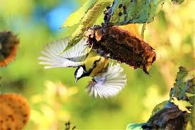 Flower And Bird - bird flower free pictures on pixabay