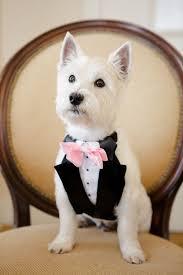 21 adorable wedding pets to make you say