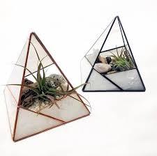 resume modernos terrarios suculentas mejores 58 imágenes de terrarios cool en pinterest terrarios
