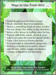 Easy Herbs To Grow Inside by Grow Your Own Herb Tea Garden The Micro Gardener