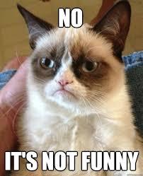 Not Funny Meme - no it s not funny cat meme cat planet cat planet