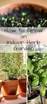 inside herb garden how to grow an indoor herb garden