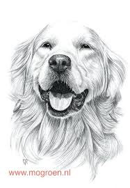 golden retriever puppy coloring pages print printable free baby