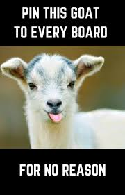 Funny Goat Memes - 25 funny memes guaranteed to make you laugh every time cutest cats