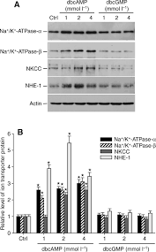 effect of osmotic shrinkage and hormones on the expression of na