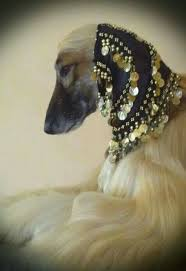 afghan hound collars uk 115 best afghan hound snoods images on pinterest afghan hound