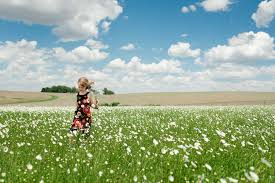 field of daisies by misty prochaska