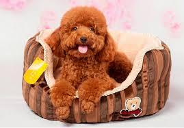levrette sur canapé acheter vente en gros nouvelle de mode chien doux lit