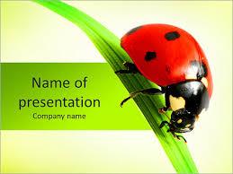 ladybug powerpoint template u0026 backgrounds id 0000005331