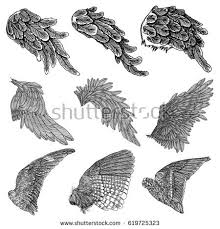 bird wings stock images royalty free images vectors