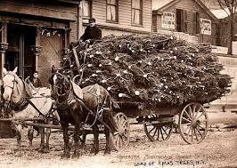 tree delivery country times