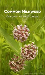 31 best wildflower directory images on pinterest wild flowers