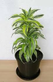10 Best Houseplants To De by 10 Best Air Filtering House Plants According To Nasa
