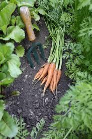 tips for the lazy gardener veggie gardener