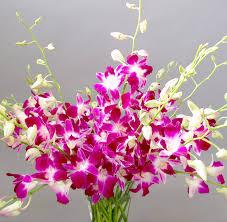 Orchid Flower Arrangements Pink Orchid Flowers Damas Flowers