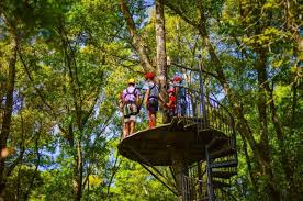 South Carolina forest images Zipline hilton head is a fun adventure park in a south carolina forest jpg
